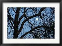 Framed Winter Moon
