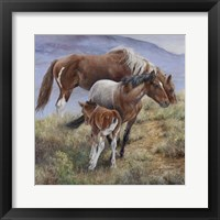 Framed Family Ties the American Mustang