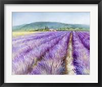 Framed Lavender III