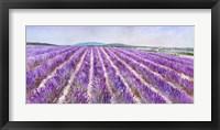Framed Lavender V