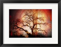Framed Cottonwood Tree Part 10