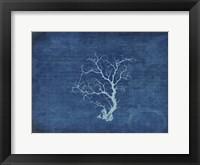 Framed Gypsy Blue Cyanotype V2