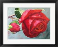 Framed Rose Otto
