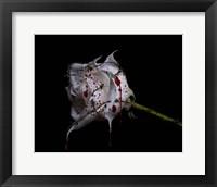 Framed Bleeding Rose