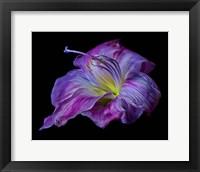 Framed Hot Pink Lily