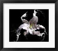 Framed Lily Splash