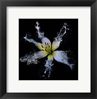 Framed Lily Splish Splash