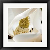 Framed Magnolia Blossom
