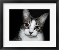 Framed House Cat