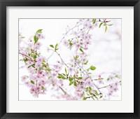 Framed Spring Branches I