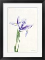 Framed Light and Bright Floral IV