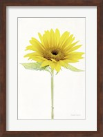 Framed Light and Bright Floral VIII