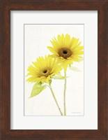 Framed Light and Bright Floral VII