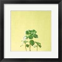 Framed Succulent Simplicity IX