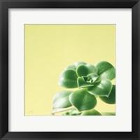 Framed Succulent Simplicity VIII