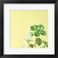 Framed Succulent Simplicity X