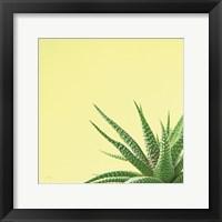 Framed Succulent Simplicity II