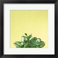 Framed Succulent Simplicity III