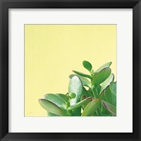 Framed Succulent Simplicity IV