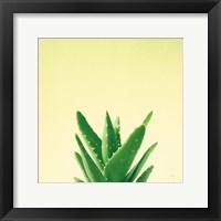 Framed Succulent Simplicity V