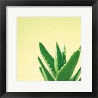 Framed Succulent Simplicity VI