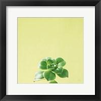 Framed Succulent Simplicity VII