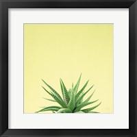 Framed Succulent Simplicity I