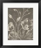Framed Botanical Beauty Chalk IX Crop
