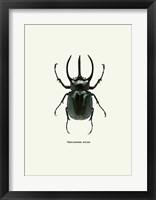 Framed Beetle Black