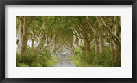 Framed Dark Hedges, Ireland
