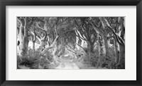 Framed Dark Hedges, Ireland (BW)