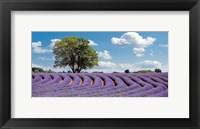 Framed Lavender Field in Provence, France