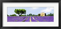 Framed Lavender Fields, France