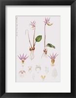 Framed Flower Drawing 3