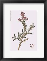 Framed Flower Drawing 4