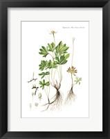 Framed Flower Drawing 6