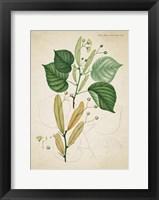 Framed Flower Drawing 9