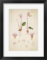 Framed Flower Drawing 10