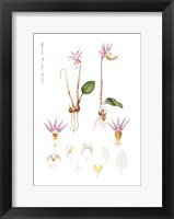 Framed Flower Drawing 11