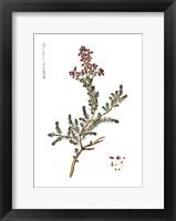 Framed Flower Drawing 12