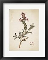 Framed Flower Drawing 13