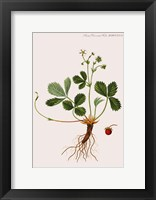 Framed Flower Drawing 14