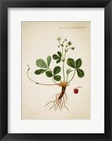 Framed Flower Drawing 15