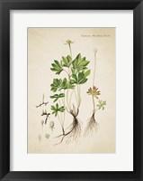 Framed Flower Drawing 17