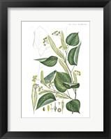 Framed Flower Drawing 20