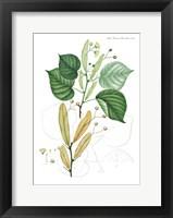 Framed Flower Drawing 22