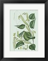Framed Flower Drawing 23