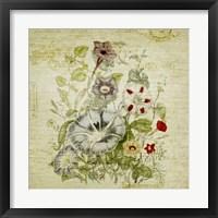 Framed Flower Print Five