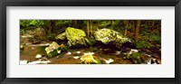 Framed Stream flowing through a Forest, Great Smoky Mountains National Park, Tennessee