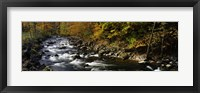 Framed River Flowing through a Forest, Chittenango Creek, New York State